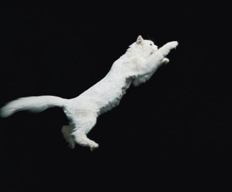 1980-1989「Cat jumping in air」:スマホ壁紙(12)