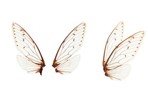Fairy「wings」:スマホ壁紙(7)