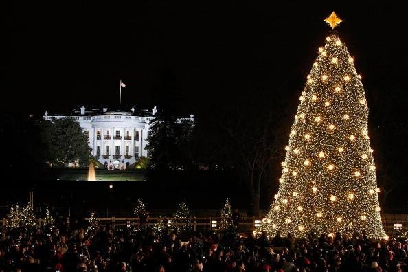 Tree「President And Mrs Bush Attend Lighting Of National Christmas Tree」:写真・画像(7)[壁紙.com]