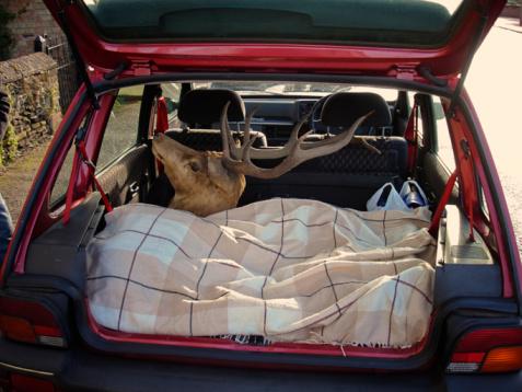 建築「Red Deer Stag's head in back of small car」:スマホ壁紙(10)