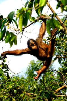 Tree「Tanjung Puting National Park in Kalimantan, Indonesia」:写真・画像(6)[壁紙.com]