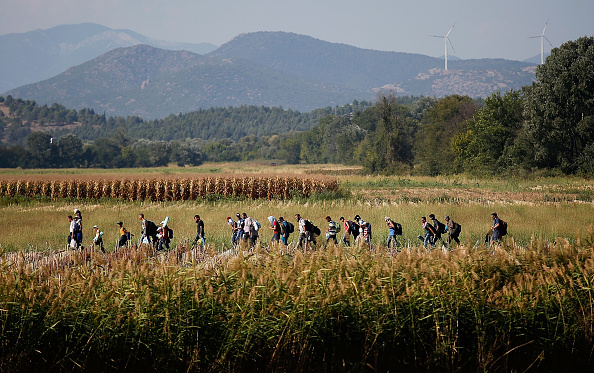 Corn「Migrants Gather At Greece-Macedonia Border As They Continue Their Journey Into Europe」:写真・画像(17)[壁紙.com]