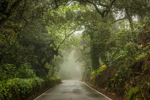 Dramatic Landscape「Moody day in forest.」:スマホ壁紙(11)