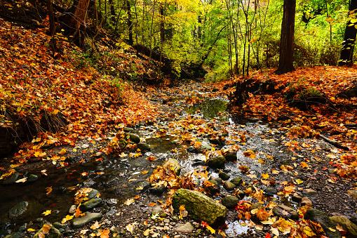 Harz Mountain「Stream in foggy Forest at autumn - Edwards Gardens」:スマホ壁紙(1)