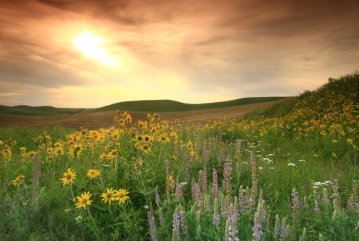 Wildflower「Prairie Wildflowers on the Great Plains」:スマホ壁紙(16)