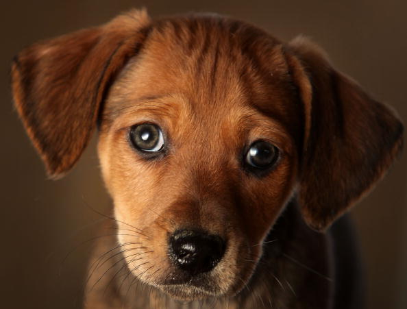 Pets「Animal Rescue Centres Feel The Strain After Christmas Pets Are Abandoned」:写真・画像(0)[壁紙.com]