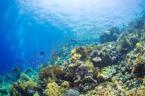 Soft Coral「Underwater landscape with corals」:スマホ壁紙(18)