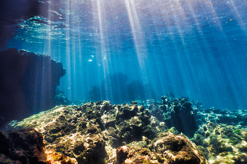 Ecosystem「Underwater seascape, Ko Haa Island 3, Andaman Sea, Krabi, Thailand」:スマホ壁紙(2)