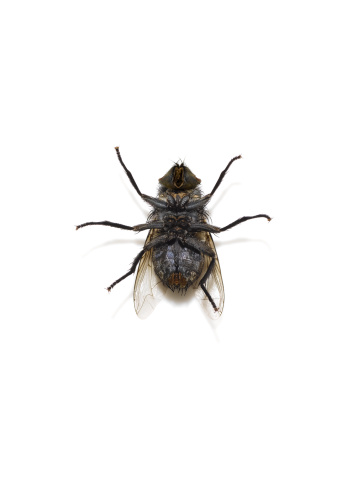 楽園「dead fly lying on its back」:スマホ壁紙(5)