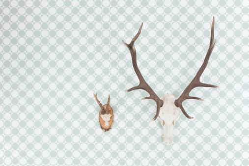 楽園「Germany, Freiburg, Deer antlers hanging on wall, close up」:スマホ壁紙(5)