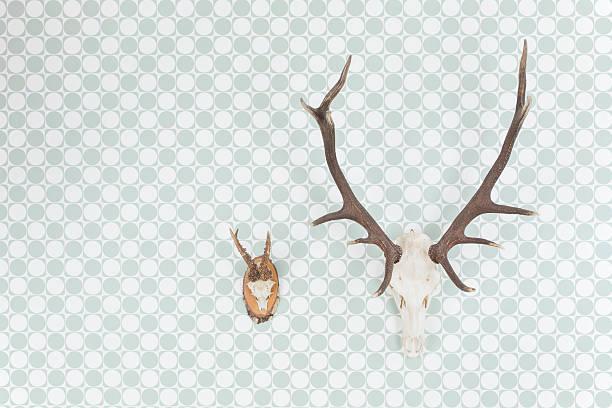 Germany, Freiburg, Deer antlers hanging on wall, close up:スマホ壁紙(壁紙.com)