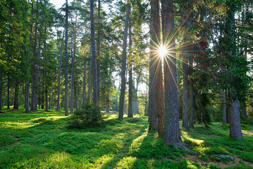 Hope - Concept「Sun with sunbeams in forest at morning. Dolomites, Trentino, Italy, Europe.」:スマホ壁紙(0)