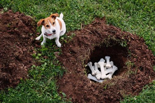 Intelligence「Dog burying bones」:スマホ壁紙(10)