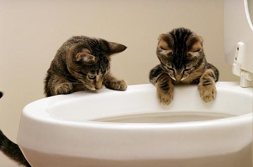 Making A Face「Curious Kittens Watching Water Flush In Toilet」:スマホ壁紙(10)