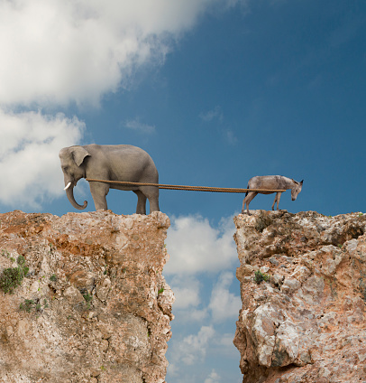 Uncertainty「Elephant and donkey playing tug-of-war over steep cliff」:スマホ壁紙(6)