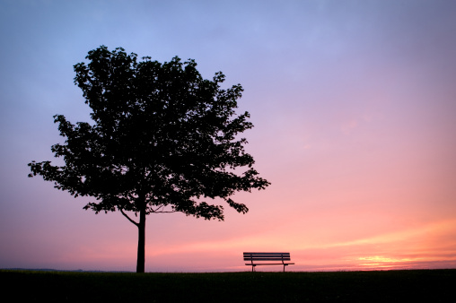 Single Tree「Park Bench with Tree」:スマホ壁紙(2)