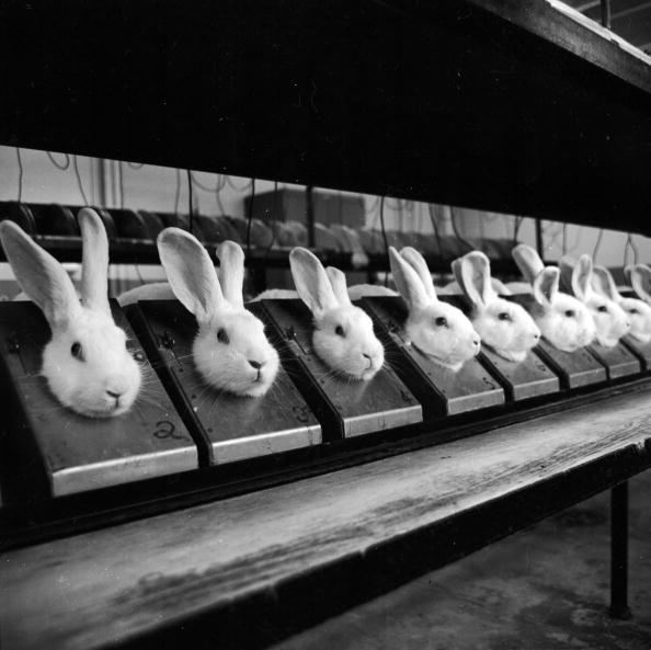 Animal Themes「Row Of Rabbits」:写真・画像(9)[壁紙.com]
