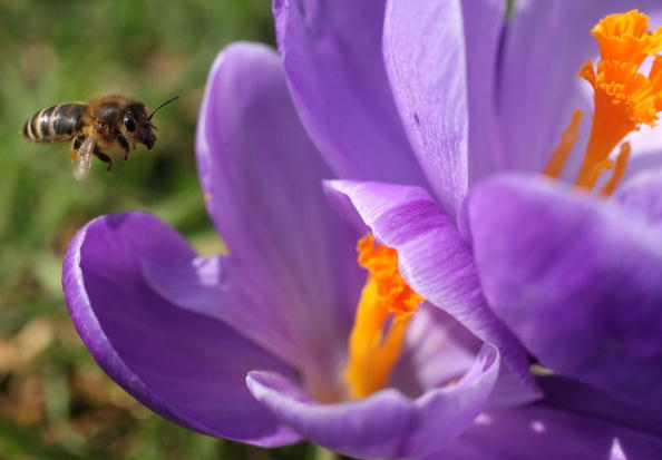 Flower「The First Signs Of Spring Are Seen At Kew Gardens」:写真・画像(12)[壁紙.com]