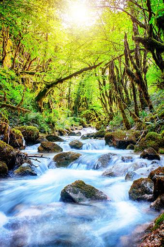 River「Beautiful wild fresh water stream in forest under bright sunlight」:スマホ壁紙(16)