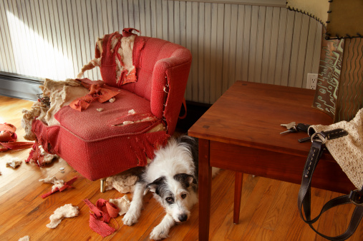 Sadness「Mischievous dog sitting next torn furniture」:スマホ壁紙(8)