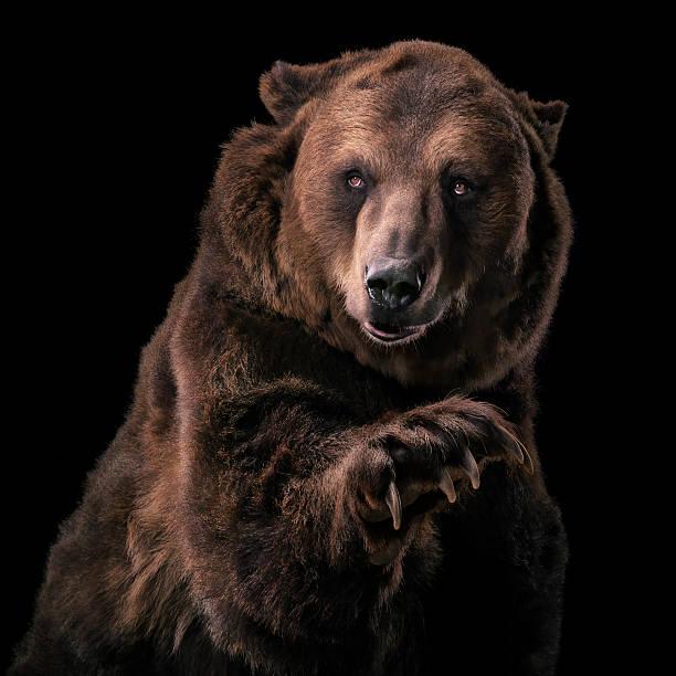 Grizzly Bear:スマホ壁紙(壁紙.com)