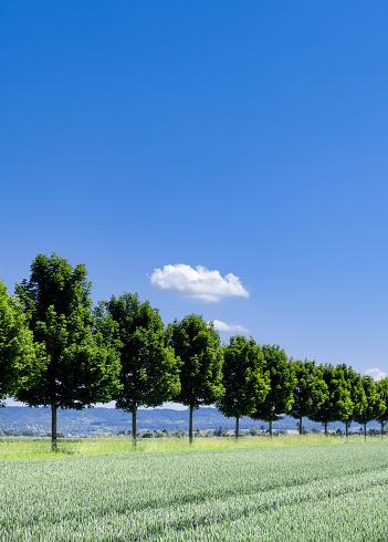 Planting「Trees,cloud,field」:スマホ壁紙(13)