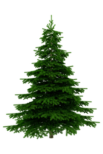 Needle - Plant Part「Christmas Tree Isolated On White Background - XXXL」:スマホ壁紙(11)