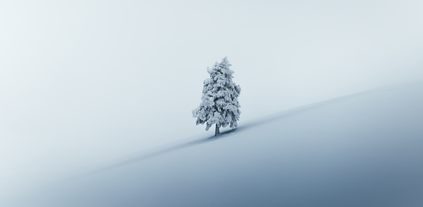 Single Tree「Christmas Tree」:スマホ壁紙(3)