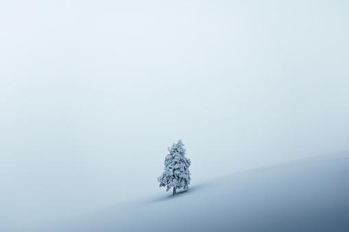 Fairy「Christmas Tree」:スマホ壁紙(3)