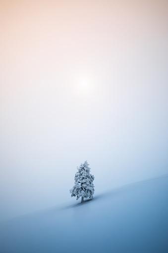 Remote Location「Christmas Tree」:スマホ壁紙(1)