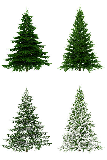 Christmas Trees COLLECTION / SET on Pure White Background (65Mpx-XXXL):スマホ壁紙(壁紙.com)