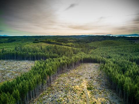 Destruction「Deforestation in Managed Woodland in Washington, USA」:スマホ壁紙(2)