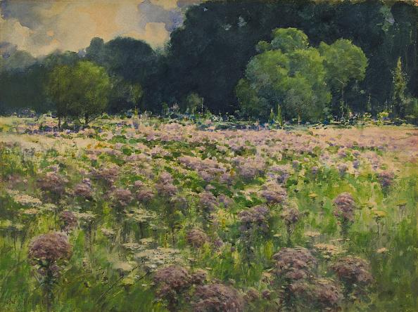 Wildflower「Field Of Joe Pie Weeds (Pride Of The Meadow)」:写真・画像(8)[壁紙.com]