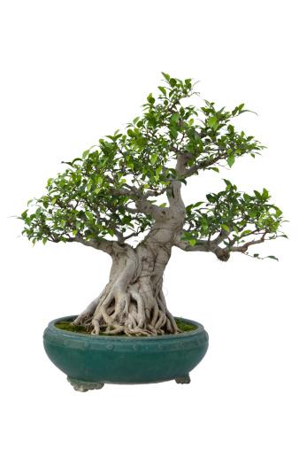 Planting「bonsai tree」:スマホ壁紙(10)