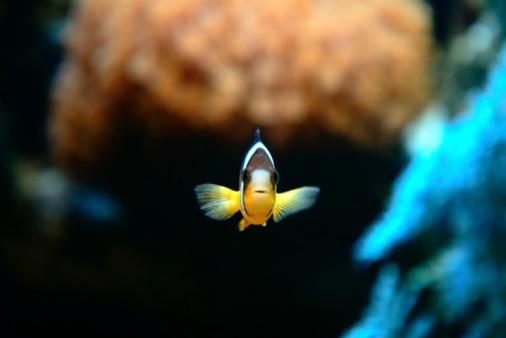 Named Animal「Clownfish Nemo」:スマホ壁紙(17)