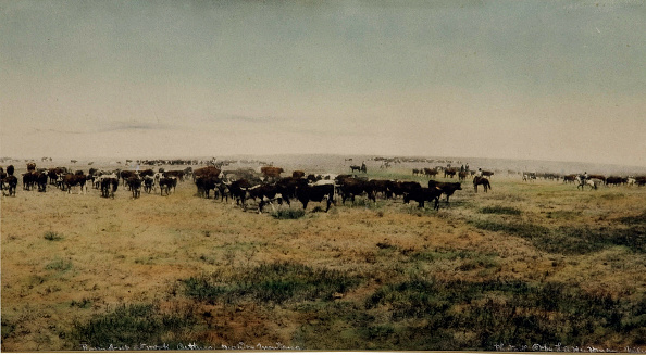 1880-1889「Round-Up At Work Cutting Big Dry Montana」:写真・画像(5)[壁紙.com]