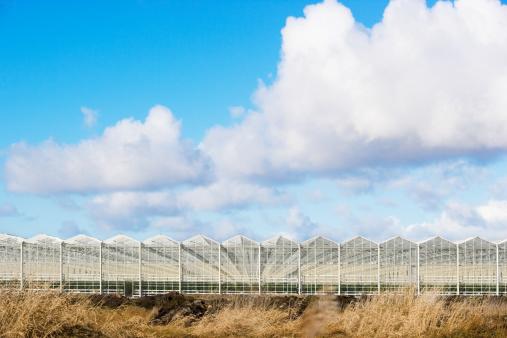 Planting「Greenhouses」:スマホ壁紙(14)