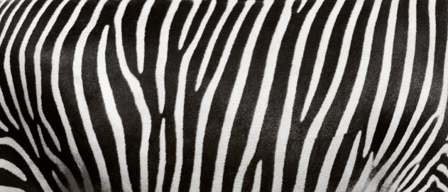 Contrasts「zebra stripes」:スマホ壁紙(4)