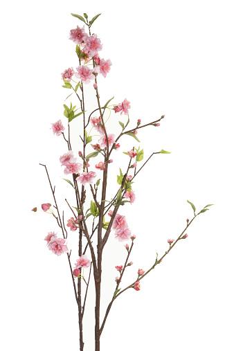桜の花「Branches with cherry blossoms」:スマホ壁紙(19)