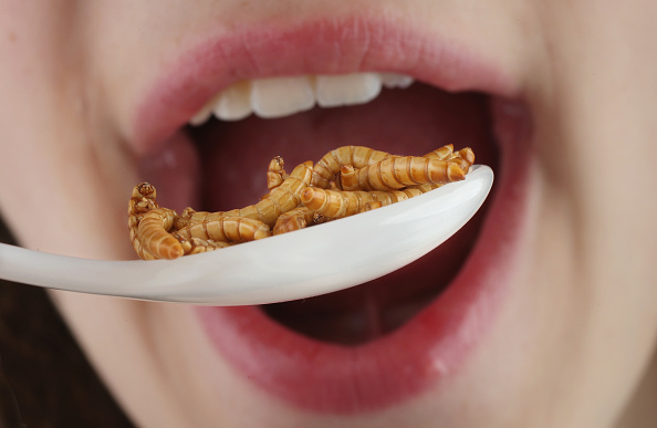Spice「Insects: Our Food Of The Future?」:写真・画像(12)[壁紙.com]