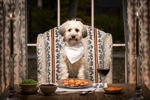 Mixed-Breed Dog「Mixed Breed Dog at the Dining Room Table」:スマホ壁紙(2)