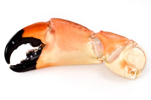 Claw「stone crab claws」:スマホ壁紙(13)