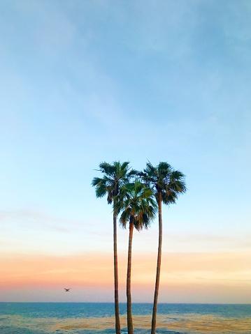Southern California「Three palm trees in the shape of a heart, Laguna Beach, Orange County, California, America, USA」:スマホ壁紙(7)