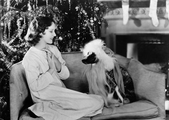 Sofa「Canine Santa」:写真・画像(17)[壁紙.com]