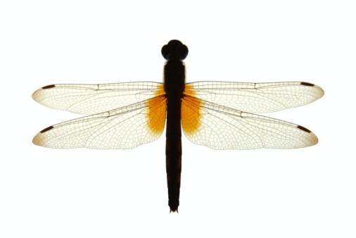 Dragonfly「Dragonfly Silhouette」:スマホ壁紙(8)