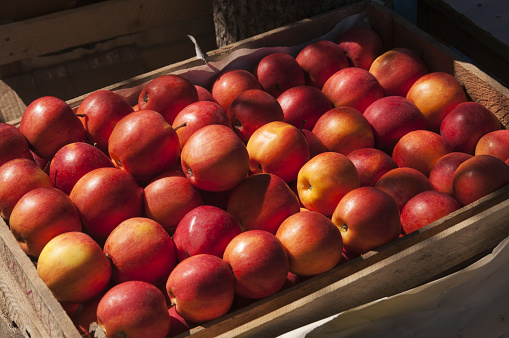 Apple - Fruit「Wooden crate of red apples」:スマホ壁紙(17)