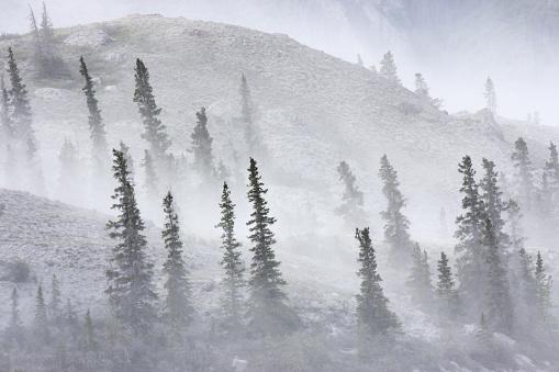 クルエーン山脈「砂嵐ほこり風林風景クルエーンを吹き飛ばさ」:スマホ壁紙(13)