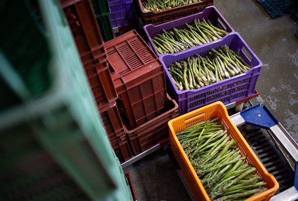 Asparagus「Locals Help Harvest During The Coronavirus Crisis」:写真・画像(7)[壁紙.com]