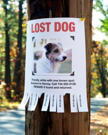 Animal Head「Lost Dog Poster」:スマホ壁紙(15)