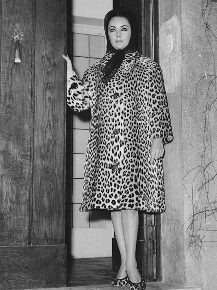Leopard Print「Elizabeth Taylor」:写真・画像(4)[壁紙.com]